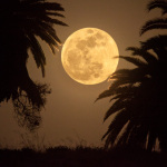 Super Moon and palm trees