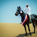 Desert Horse and Rider